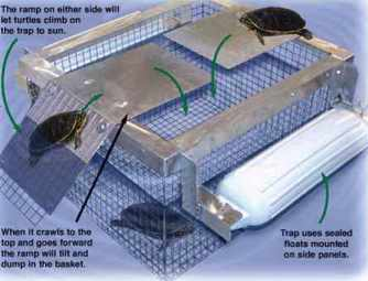 Ramp type turtle trap